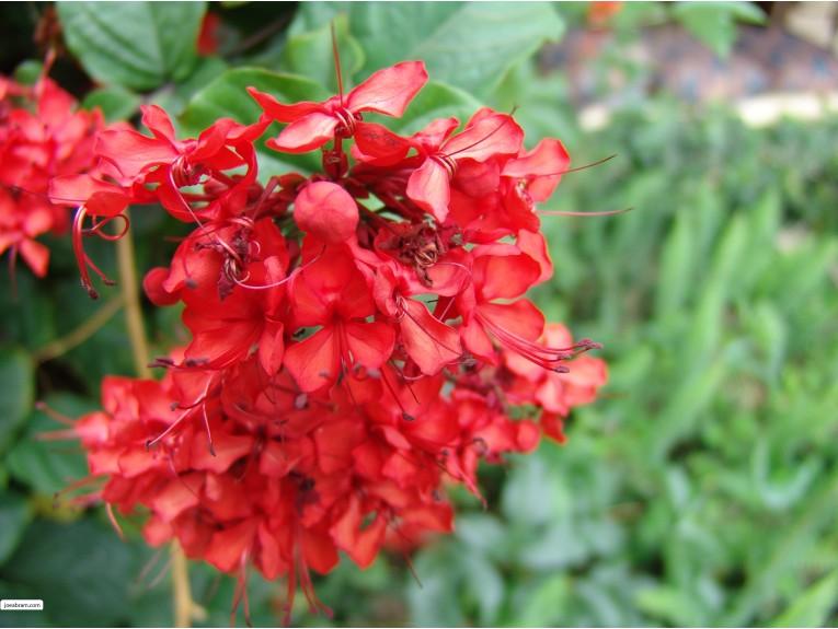 African Flower-1